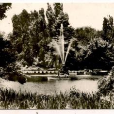 Carte postala(ilustrata)-BUCURESTI-Gradina Cismigiu - Carte Postala Muntenia dupa 1918