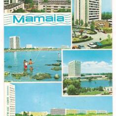 Carte postala(ilusrata)-MAMAIA