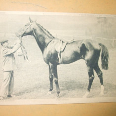 Carte postala echitatie cal animale Anglia Famous horses Perseus