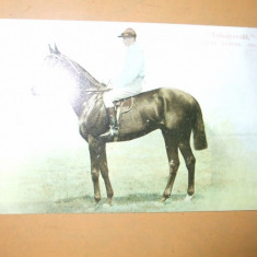 Carte postala echitatie cal animale Anglia jocheu Derby winner 1901 Volodyovski