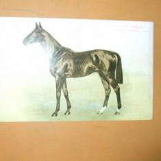 Carte postala echitatie cal animale Anglia Derby Winner 1902 Ard Patrick
