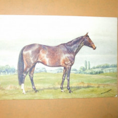 Carte postala echitatie cal animale Anglia English Thoroughbred Sire