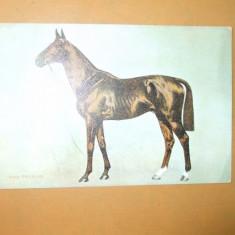 Carte postala echitatie cal animale Anglia Ard Patrick