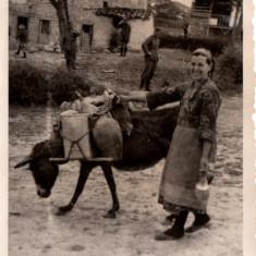 Magar pentru Aprovizionarea Armatei Germane - Fotografie