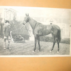 Carte postala echitatie cal animale Anglia famous horses Sceptre