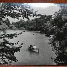 Carte postala RPR JUDETUL BUZAU - BUZAU - PARCUL CRANGUL NECIRCULATA - Carte Postala Muntenia dupa 1918