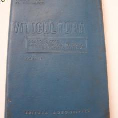 VITICULTURA ANUL 1964 .
