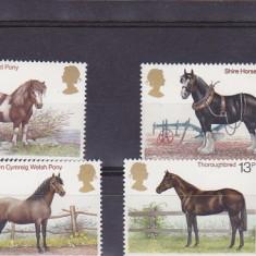 Fauna ,cai de rasa ,Anglia.