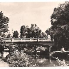 Carte postala- TIMISOARA-Pod peste Bega - Carte Postala Banat dupa 1918
