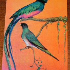Carte postala ilustrata Fauna - Muzeul de istorie naturala Grigore Antipa - Pasari - Chesali. Calurus resplendens - Carte postala tematica