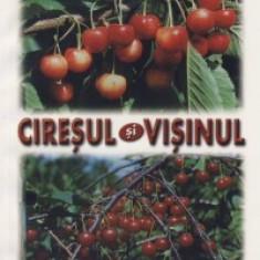 Lenuta Chira, A. Asanica - Ciresul si visinul