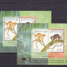 Fauna, maimute, joint, Australia. - Timbre straine