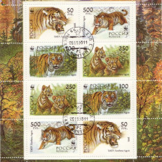 Bloc timbre tigri rusia 1993 - Timbre straine