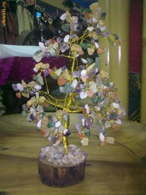 Pomul Vietii foto