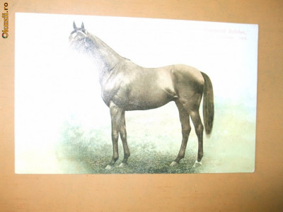 Carte postala echitatie cal animale Anglia Derby Winner 1900 Diamond Jubilee foto