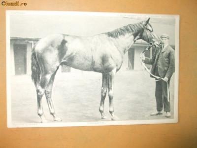 Carte postala echitatie cal animale Anglia famous horses Carabine foto
