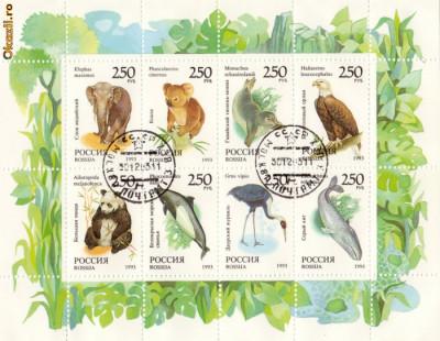BLOC TIMBRE RUSIA ANIMALE 1993 foto