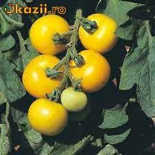 "Seminte rosii galbene ""Golden Sunburst"" foto mare"