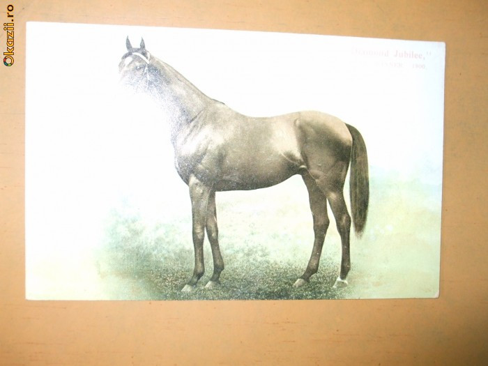 Carte postala echitatie cal animale Anglia Derby Winner 1900 Diamond Jubilee
