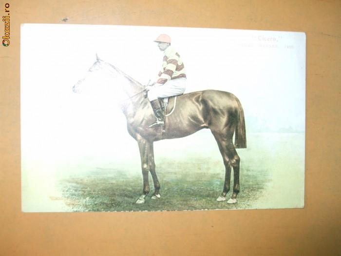 Carte postala echitatie cal animale Anglia jocheu Derby winner 1905 Cicero