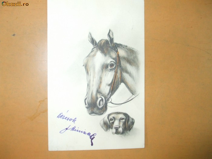 Carte postala echitatie cal animale caine ilustrator desen
