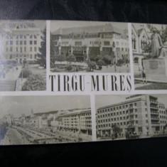 Targu Mures - Mozaic 1