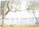 MAMAIA PE SIUT GHIOL DIN 1964
