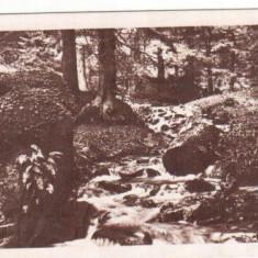 SIBIU : SPRE PALTINIS ( 1945 )