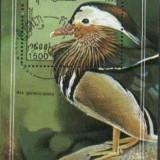 CAMBODGIA 1993 - PASARI DOMESTICE, RATE, colita stampilata S47, Asia, Natura