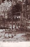 R2969 Busteni parcul zoologic circulat 1958 RPR
