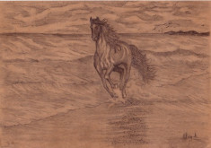 CAL PE PLAJA,desen in creion foto