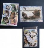 + Mini-puzzle 15 piese de la kinder - Urs +