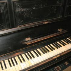 Pianina Altele Hoffmann