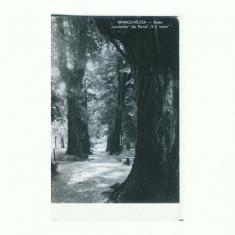CP161-77 Ramnicu Valcea -Aleea ,,secularilor -circulata1960
