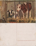 Ilustrata animale 14-vaci-ilustratori