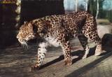 Ilustrata animale 12