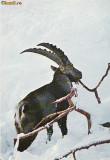 Ilustrata animale 13