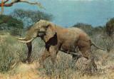 Ilustrata animale 23-elefant, Necirculata, Printata