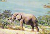 Ilustrata animale 25