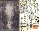 Ilustrata animale -cerb-vanatoare, Circulata, Printata