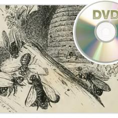 56 carti vechi APICULTURA albine apicola miere polen - 1 DVD