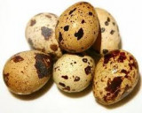 Vand oua de prepelita pentru consum sau incubat