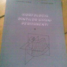 MORFOLOGIA DINTILOR UMANI PERMANENTI