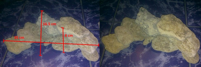 "Decor Acvariu ""piatra de mare"""