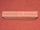 Compendiu de Anatomie - Mircea Ifrim, Gheorghe Niculescu