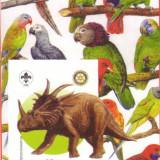 COLITA ANIMALE ERITREA 2005   13