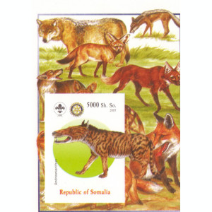 COLITA ANIMALE SOMALIA 2005   1