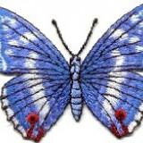 Emblema brodata adeziva-fluture