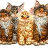Broderie adeziva, patru pisici