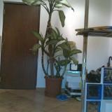 Planta ornamentala